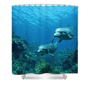 Bottlenose Dolphins And Coral Reef Shower Curtain by Konrad Wothe