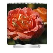 Brass Band Roses Shower Curtain by Rona Black