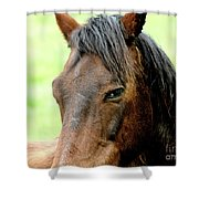 Brown Horse With Sultry Eye . R5907 Shower Curtain by Wingsdomain Art and Photography