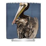 Brown Pelican Preening La Jolla Shower Curtain by Sebastian Kennerknecht