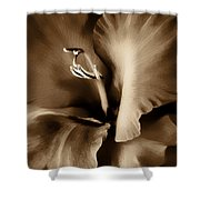 Brown Velvet Gladiolus Flower Shower Curtain by Jennie Marie Schell