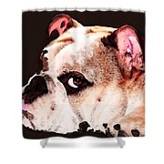 Bulldog Art - Let's Play Shower Curtain by Sharon Cummings