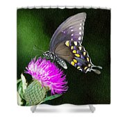 Butterfly And Thistle Shower Curtain by Jeff Kolker