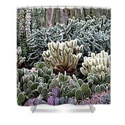 Cactus Field Shower Curtain by Rebecca Margraf