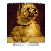 Cairn Terrier   Shower Curtain by George Earl