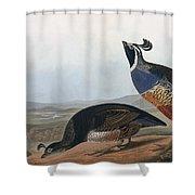 Californian Partridge Shower Curtain by John James Audubon