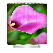 Calla Lilly Shower Curtain by Kathleen Struckle