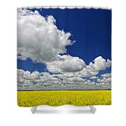 Canola Field Shower Curtain by Elena Elisseeva