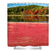 Cape Cod Cranberry Bog Shower Curtain by Matt Suess