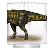 Carcharodontosaurus Iguidensis Shower Curtain by Sergey Krasovskiy