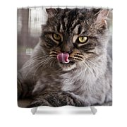 Cat Of Nicole 2 Shower Curtain by Heiko Koehrer-Wagner
