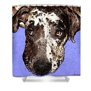 Catahoula Leopard Dog - Soulful Eyes Shower Curtain by Sharon Cummings