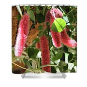 Chenille Caterpillar Plant Shower Curtain by Corey Ford