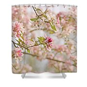 Cherry Blossom Delight Shower Curtain by Kim Hojnacki