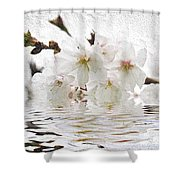 Cherry Blossom In Water Shower Curtain by Elena Elisseeva