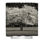 Cherry Blossom Tree - Ocean County Park Shower Curtain by Angie Tirado
