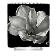 Chinese Magnolia Shower Curtain by Endre Balogh
