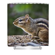 Chipmunk Shower Curtain by Andrea Silies