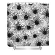 Chrysanthemum Flowers Shower Curtain by Graeme Harris
