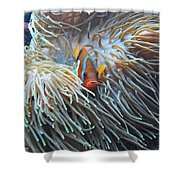 Clown Fish Shower Curtain by Michael Peychich