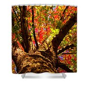 Colorful Autumn Abstract Shower Curtain by James BO  Insogna