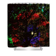 Colorful Tree Shower Curtain by James BO  Insogna