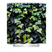 Common Ivy Shower Curtain by Fabrizio Troiani