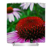 Coneflowers Shower Curtain by Juergen Roth