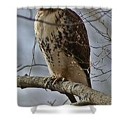 Cooper's Hawk 2 Shower Curtain by Joe Faherty
