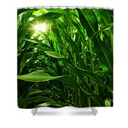 Corn Field Shower Curtain by Carlos Caetano