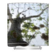 Cotton Ball Tree Shower Curtain by Douglas Barnard