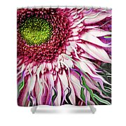 Crazy Daisy Shower Curtain by Christopher Beikmann