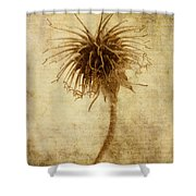 Crown Of Thorns Shower Curtain by John Edwards