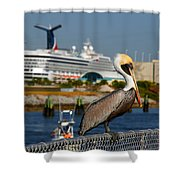 Cruising Pelican Shower Curtain by Susanne Van Hulst