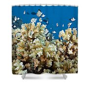 Damselfish Among Coral Shower Curtain by Dave Fleetham - Printscapes