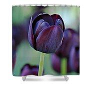 Dark Purple Tulip Shower Curtain by Sandy Keeton