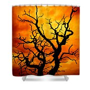 Dead Tree Shower Curtain by Meirion Matthias