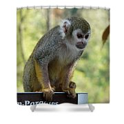 Deceptive Paradise Shower Curtain by Valerie Ornstein