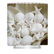 Decorative Seashells Shower Curtain by Kyle Rothenborg - Printscapes