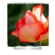 Delicate Beauty Shower Curtain by KAREN WILES