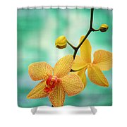Dendrobium Shower Curtain by Allan Seiden - Printscapes