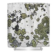 Detail Of Lichen On A White Rock Lake Shower Curtain by Michael Interisano