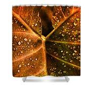 Dew Drops Shower Curtain by Susanne Van Hulst