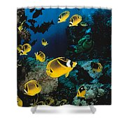 Diver And Butterflyfish Shower Curtain by Dave Fleetham - Printscapes