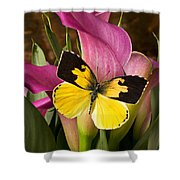 Dogface Butterfly On Pink Calla Lily  Shower Curtain by Garry Gay