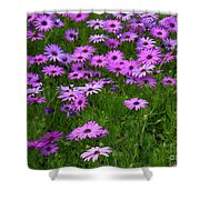Dreaming Of Purple Daisies  Shower Curtain by Carol Groenen