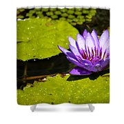 Droplets Shower Curtain by Teresa Mucha