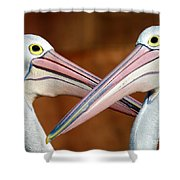 Duelling Pelicans Shower Curtain by Avalon Fine Art Photography