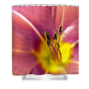 Easter Lily 3 Shower Curtain by Tony Cordoza