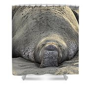 Elephant Seal 3 Shower Curtain by Bob Christopher